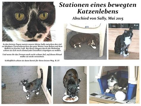 KatzenlebenAbschied